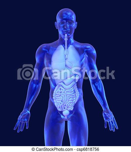 Glass Man with Internal Organs - csp6818756