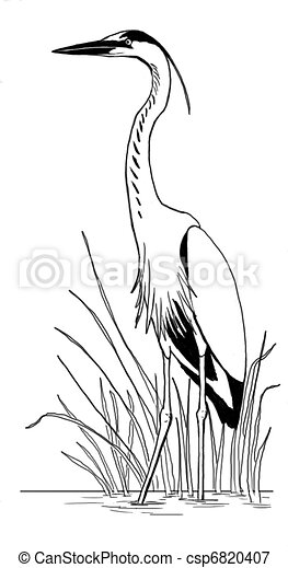Great Blue Heron in reeds - csp6820407