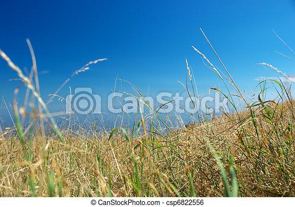 Arid grass - csp6822556