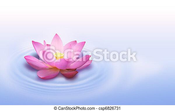 lotos, blume - csp6826731