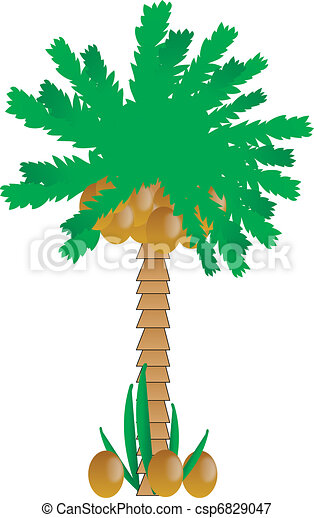 Palm tree with coconuts - csp6829047