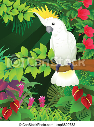 cockatoo  - csp6829783