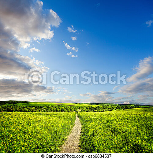 Summer landscape with green meadow and cereal - csp6834537