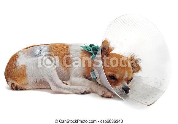 after an operation - csp6836340