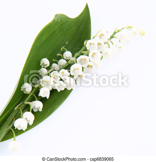 Lilies of The Valley Wallpaper Lily of The Valley Flowers