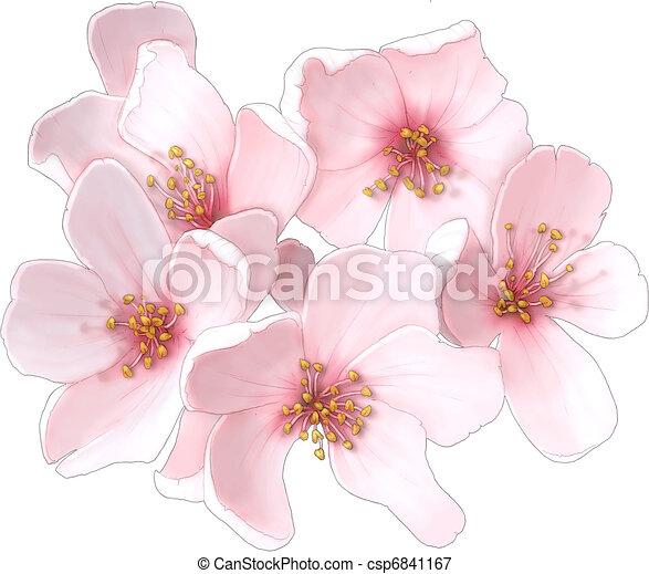 Cherry Blossom  - csp6841167