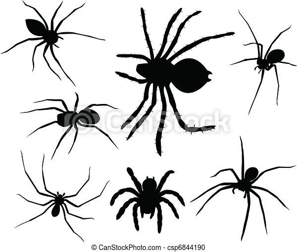 Spiders - csp6844190