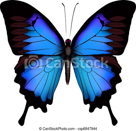 Blue butterfly papilio ulysses (Mountain Swallowtail) isolated vector on white background  - csp6847944