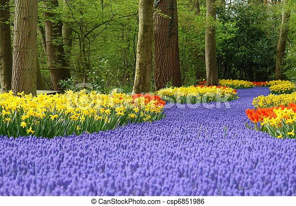 primavera, flor,  Keukenhof, cama - csp6851986