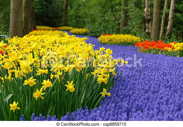 primavera, flor,  Keukenhof, cama - csp6859710