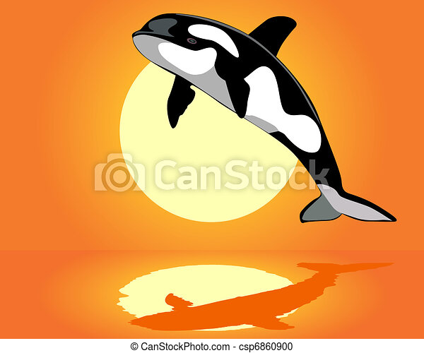 Killer Whale over the water - csp6860900