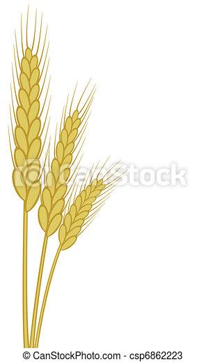 wheat ears - csp6862223
