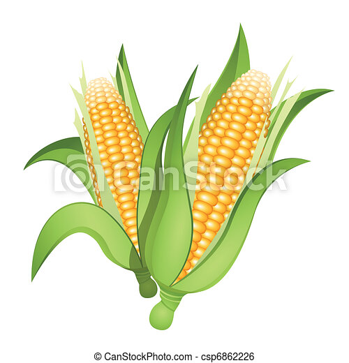 Indian Corn Drawing Ears of Corn Two Ears of