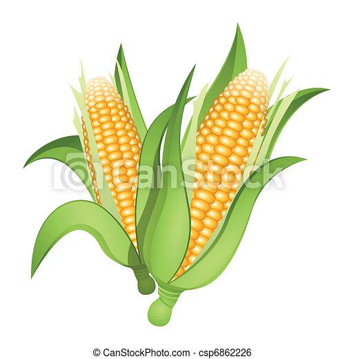 Ears of corn - csp6862226