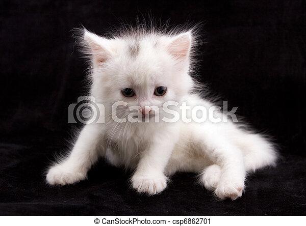 alertness, animal, cat, cute, eyes, feline, isolated, kitten, lo - csp6862701