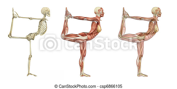 Yoga Dancer Pose - Anatomical Overlays - csp6866105