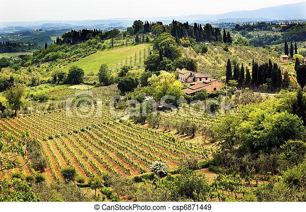 Tuscan Farm Vineyard San Gimignano Tuscany Italy - csp6871449