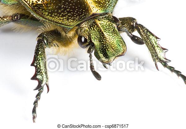 iridescent bug in close up - csp6871517