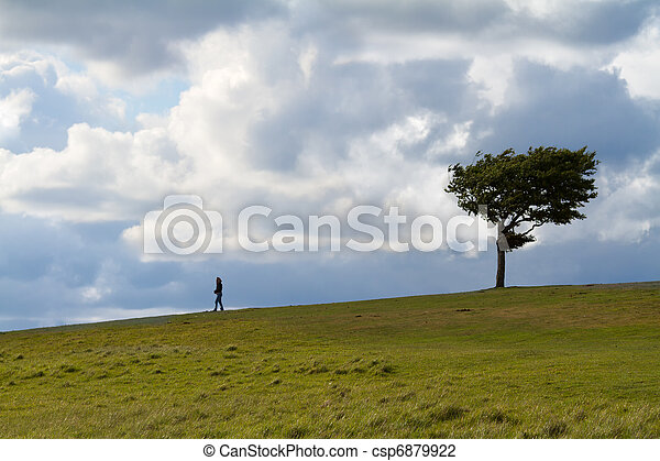 Tree with walker at Cleeve Hill on a windy day, Cotswolds, England - csp6879922