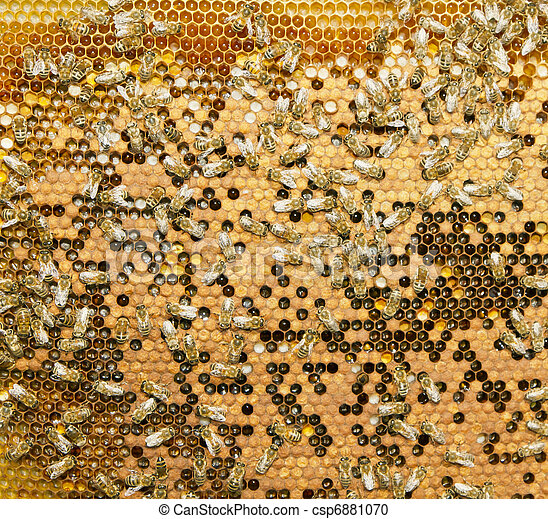 swarm of bees produce honey - csp6881070