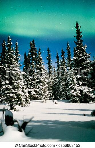 nord, lumières, aurore, boréal, et, hiver, forêt - csp6883453
