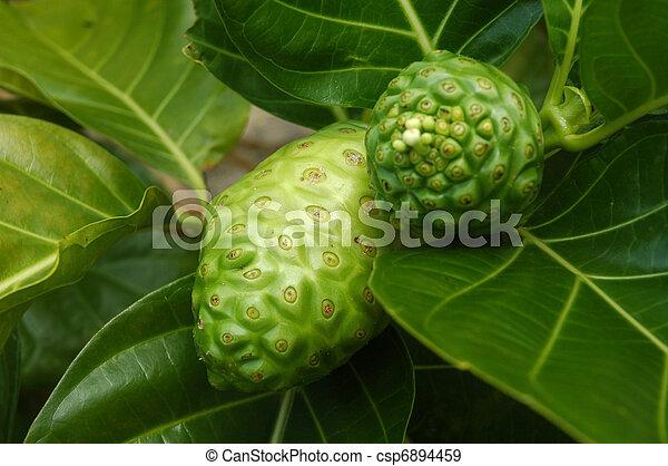 Noni Fruit - csp6894459