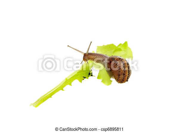 Stock de fotos caracol comida hoja imagenes for Caracol de jardin alimentacion