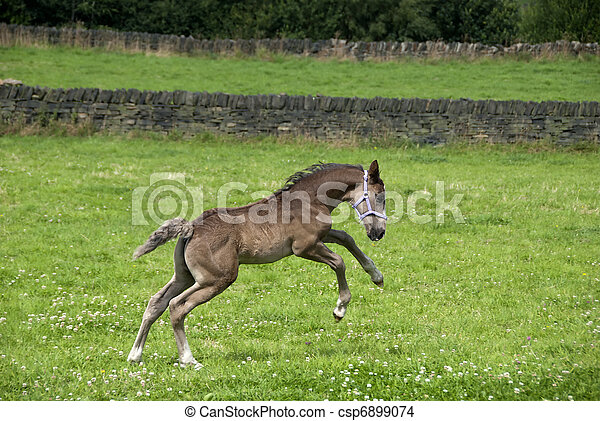 Prancing Foal - csp6899074