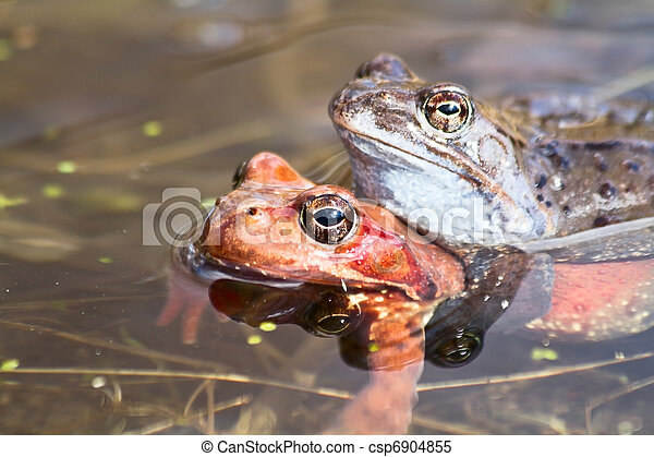 frogs in the pond - csp6904855