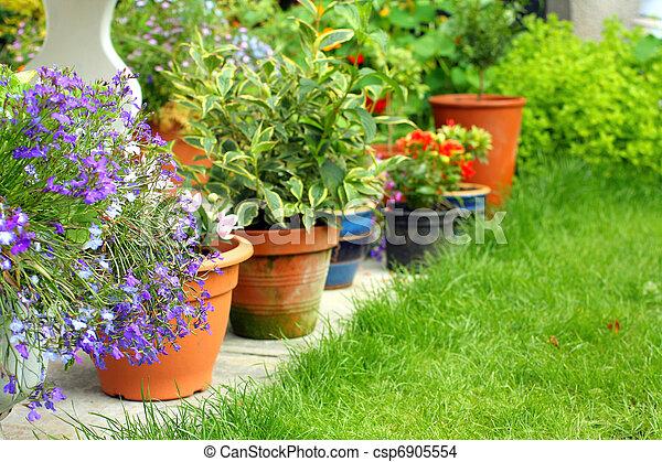 lobelia, flores, y, plantas, en, el, jardín - csp6905554
