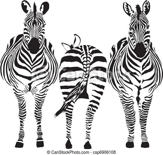 Zebras - csp6906108