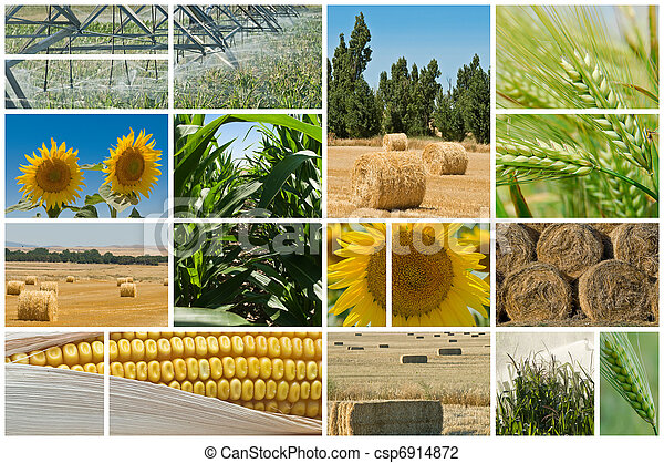 農業 - csp6914872