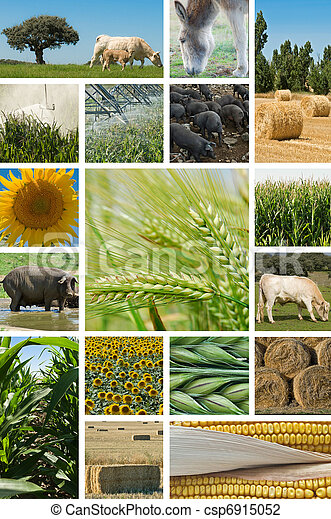 Agriculture and animal husbandry. - csp6915052
