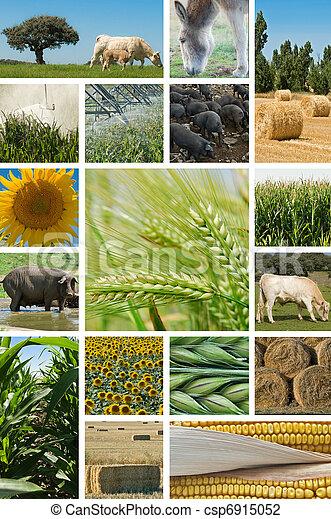 husbandry., 農業, 動物 - csp6915052