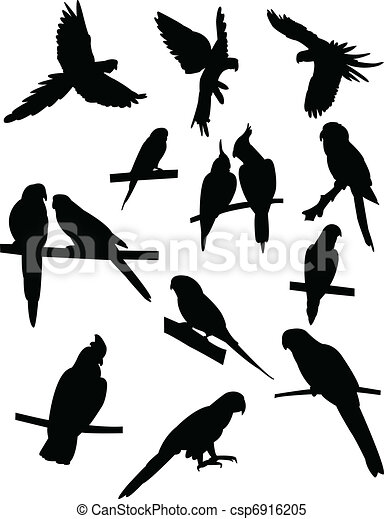 Collection of parrots - csp6916205