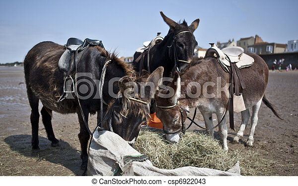 Donkey Eating Hay on Burnham-On-Sea Beach - csp6922043