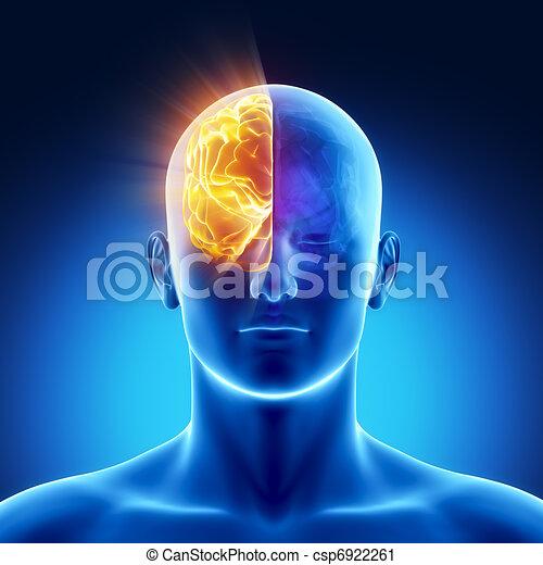 Part of brain - right HEMISPHERE - csp6922261