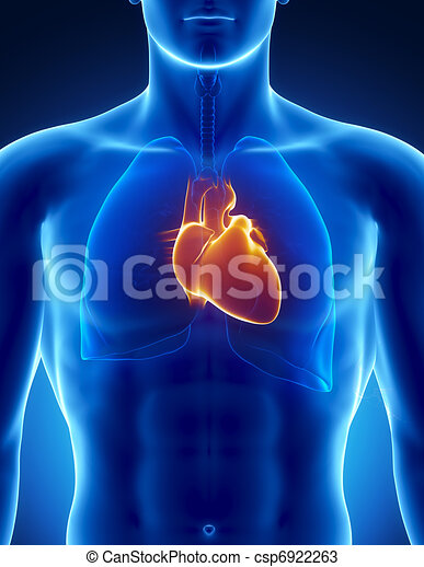 Human heart with thorax - csp6922263