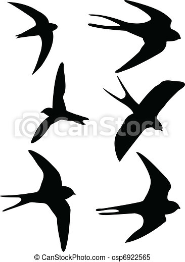 Swallows silhouettes - csp6922565