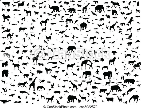 Animals mix collection - csp6922572