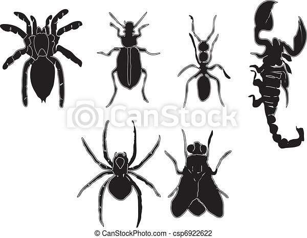 Insects - csp6922622