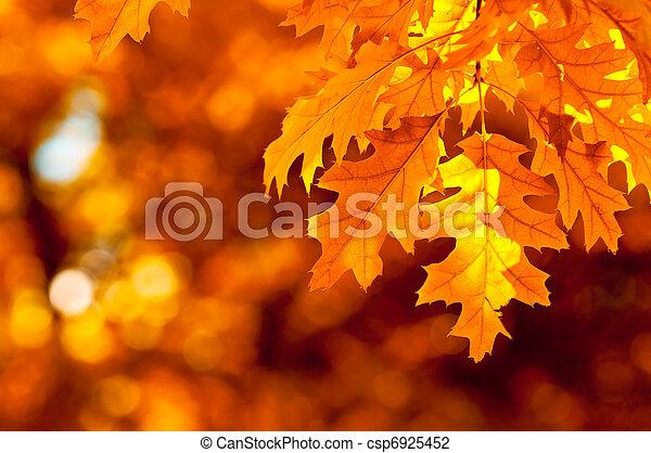 otoño, muy, superficial, foco, hojas - csp6925452