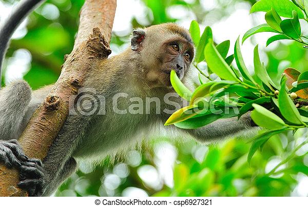 ape gathering food - csp6927321