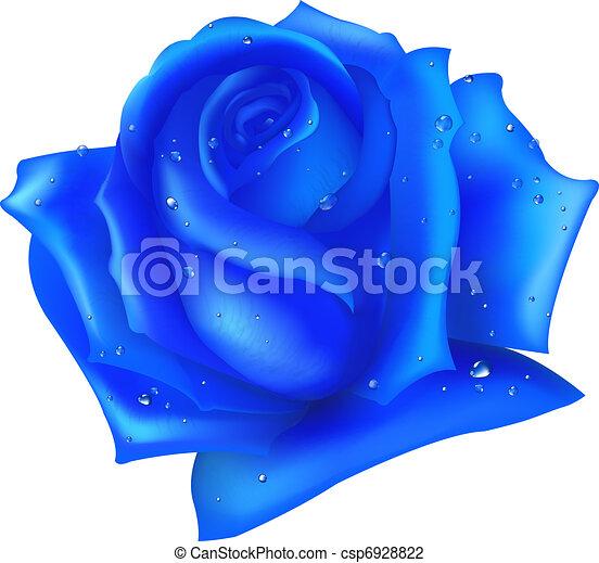 Blue Rose - csp6928822
