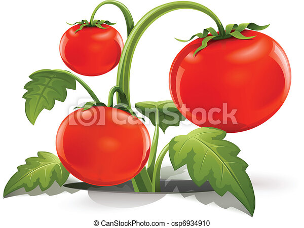 red ripe tomato - csp6934910