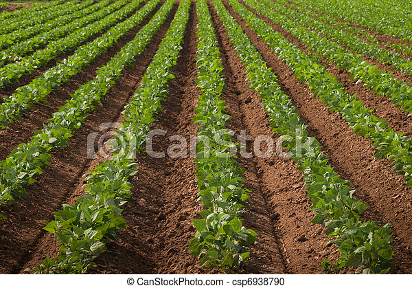 Agricultural land with row crops - csp6938790