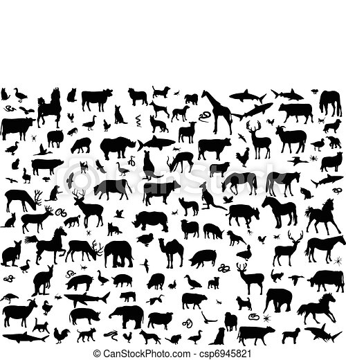 Big collection of different animals - csp6945821