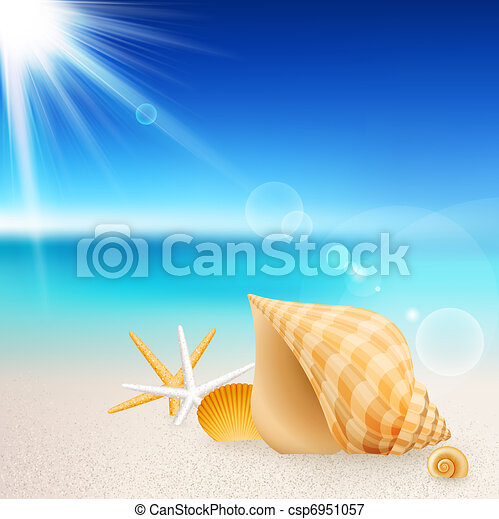 Shells and starfishes on the beach - csp6951057
