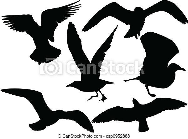 seagull collection - vector - csp6952888