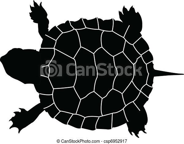 turtle - vector - csp6952917